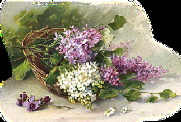 Gifs et tubes fleurs lilas page 4 for Bouquet de fleurs lilas