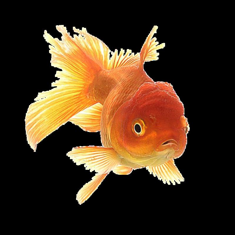 Gifs et tubes poissons page 3 for Achat poisson rouge paris 18