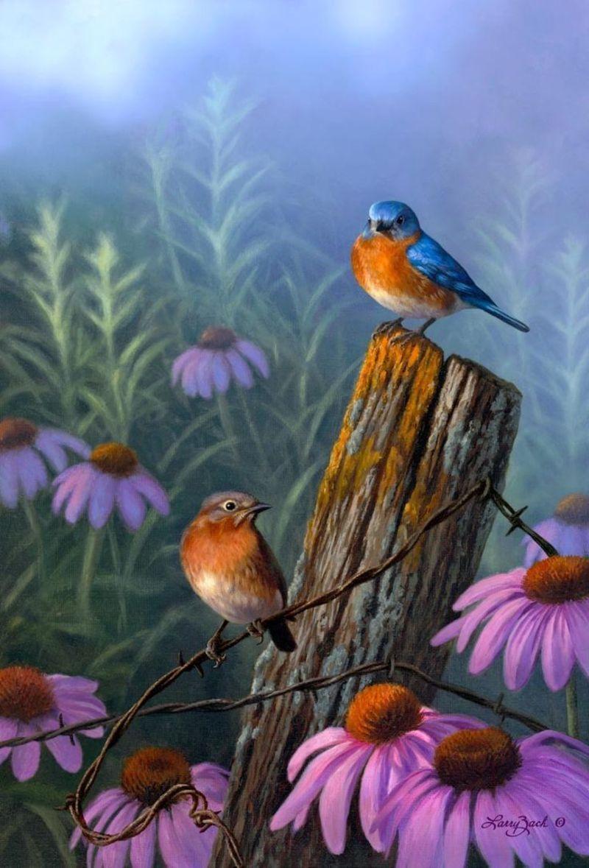 Oiseaux exotiques for Photos to paint