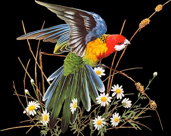 Résultat d'images pour Gifs pochoir oiseaux et fleurs